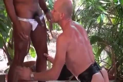 Thirsty Bald males continue To drink